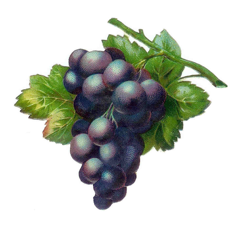 grapediecut1