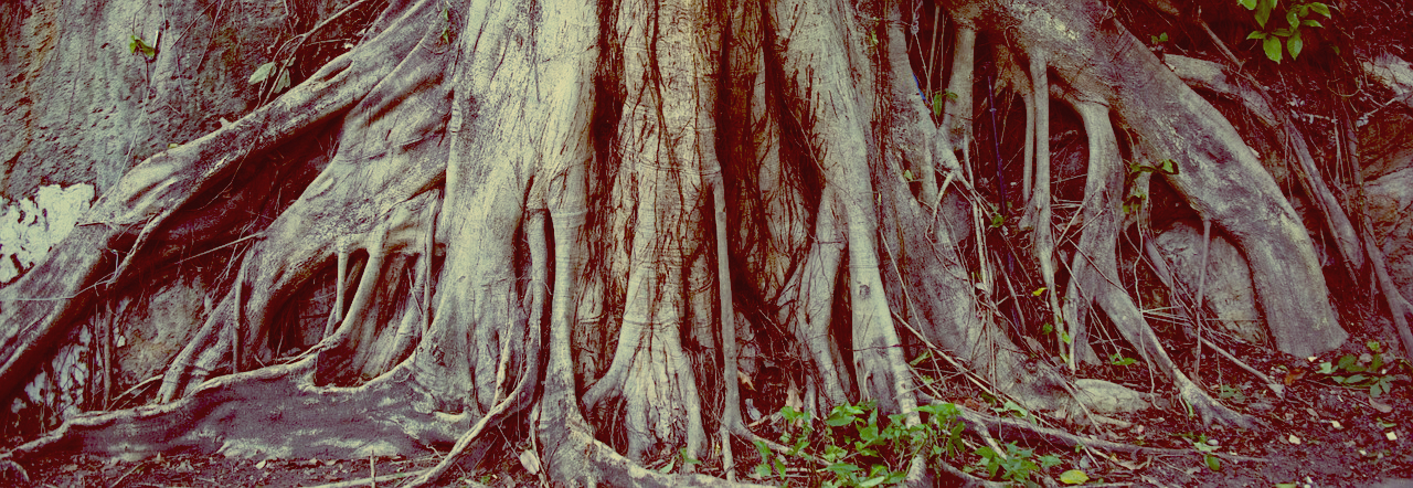 Heart Roots: Energy, Love, and Resonance