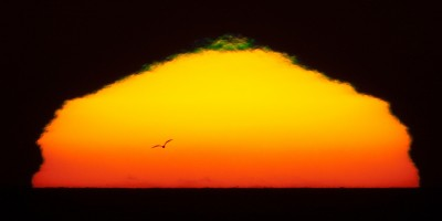 "Green Flash Sunset Gull in Silhouette 1200mm 30Oct2009 . Sunset with small green flash and a gull bird flying forming a silhouette in front of the blazing setting sun with 1200mm (600mm + 2X Tele-extender) off the coast of Morro Bay, CA 30 Oct. 2009. Minimal global adjustments in Lightroom in RAW conversion. Photomorrobay Yahoo! Group Meet-up http://tech.groups.yahoo.com/group/photomorrobay/ Friday 30 Oct. 2009, Morro Bay, CA - Invite said: Can you Join me/us for a Photo Meet-up Friday 10/30/09 5:30 - 7PM Morro Strand State Beach at Azure Street entrance, at water's edge... for sunset (possible green flash; birds in silhouette in front of sun) and airplane's flying past moon? Bring as long a lens as you have, and a tripod for these kinds of shots. Of course, wide-angle sunsets are terrific too. Just come and have fun! Howard Ignatius and I (Mike Baird) went out yesterday (10/29/09) on a whim and loved what we saw. 6:17 PM http://www.flickr.com/photos/howardignatius/4056979539/ 6:09 PM http://www.flickr.com/photos/mikebaird/4057468736/ Sunset: 6:11PM Civil Twilight: 6:37PM Reminder, re-set your camera clocks this weekend when daylight savings time ends! (10/31 - 11/1 2009) . Tried to reproduce Two Brown Pelicans (Pelecanus occidentalis) fly in front of the setting sun in silhouette off Morro Strand State Beach, in Morro Bay, CA., and Airplane Flies by the Moon in post-sunset light. Photo by Michael ""Mike"" L. Baird, mike at mikebaird d o t com, flickr.bairdphotos.com, Canon 1D Mark III in Liveview mode (effectively locks the mirror up), IS off, remote shutter release, with Circular Polarizer (did not even adjust it), on a Canon EF 600mm f/4L IS USM Super Telephoto Lens for Canon SLR Cameras on a Wimberley Head II from tripodhead.com on a Gitzo GZGT5540LS Gitzo Series 5 tripod, Systematic Tele Studex 6 X Carbon Fiber 4 Section Tripod Legs with G-Lock, Maximum Load 55.0 lbs. Maximum Height 59.4 from adorama.com"