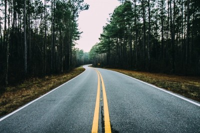 pathing-forest-trees-forest-road